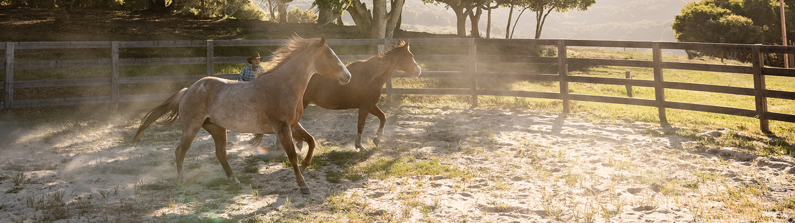 Equine Experiences