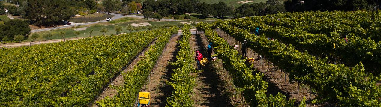 Carmel Valley Ranch_Property_Vineyard Aerial_Wine Harvest Rows Pattern 0919_SChu