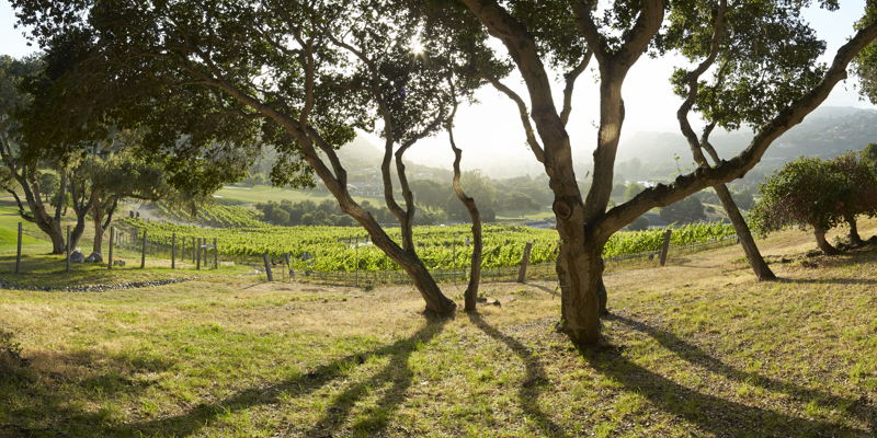 Carmel Valley Ranch_Property_vineyard view through oaks