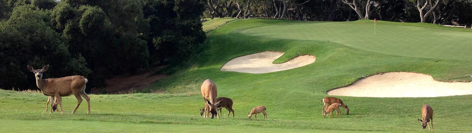 Golf-Services