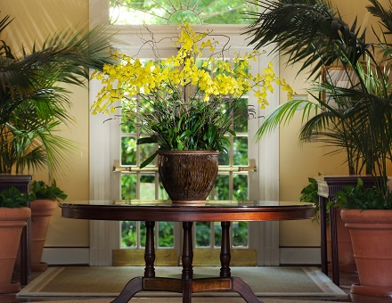 Lobby Orchid
