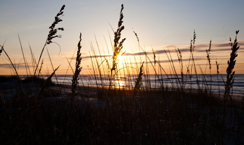 Wild Dunes_Nature_SunriseSeaOats