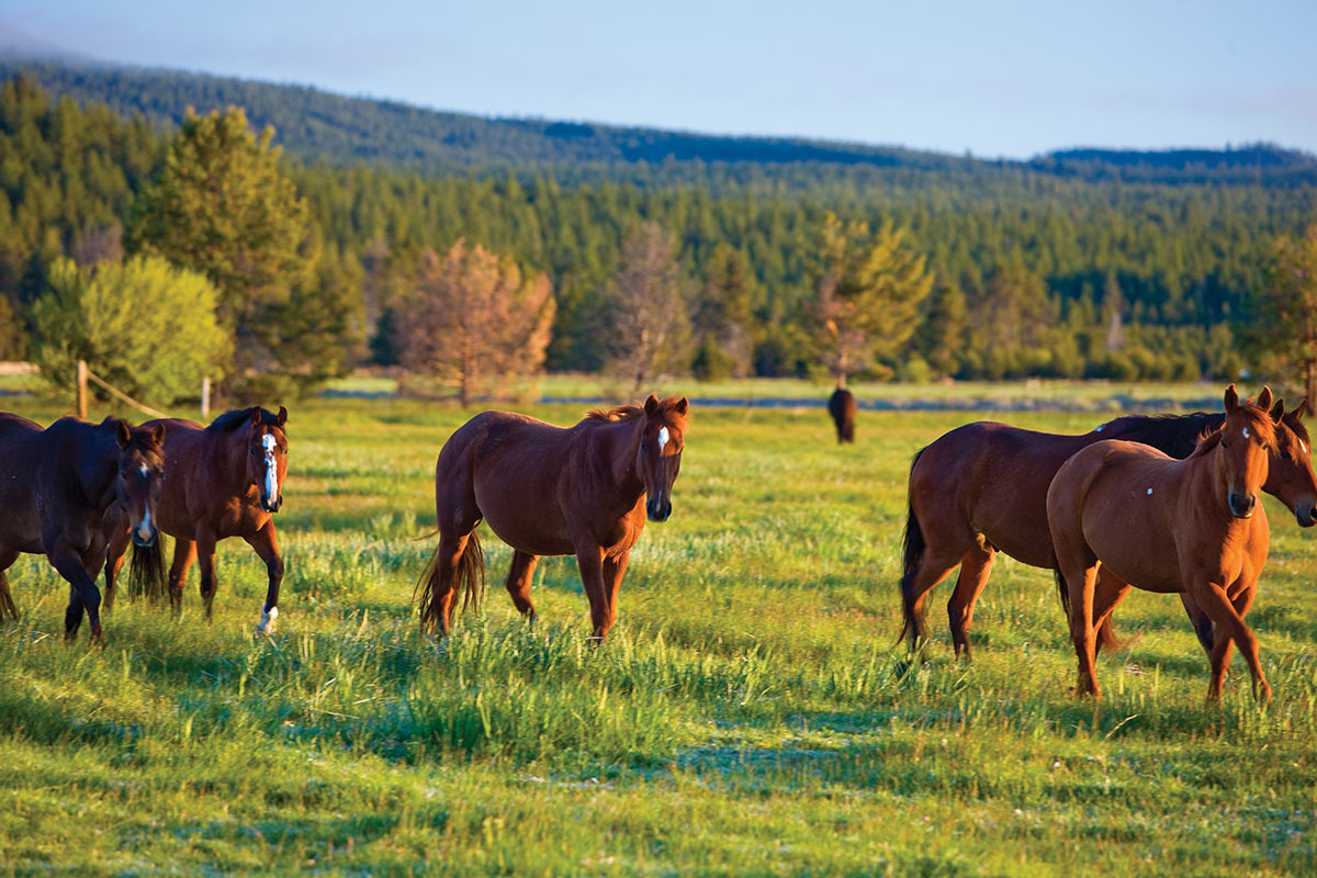 Horses in field