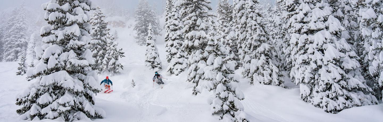 trees_pow_skiers_tamarasusa