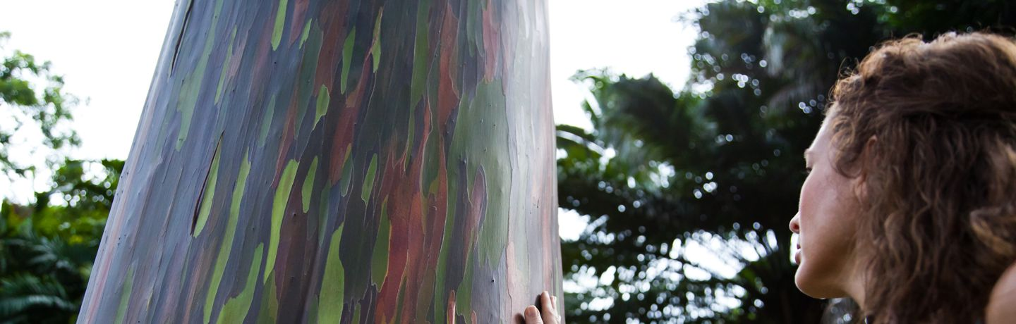 Woman Touching Painted Tree