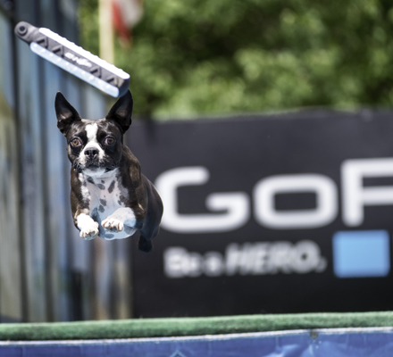 <b>Dock dogs in Go Pro Games in Vail, CO.</b>