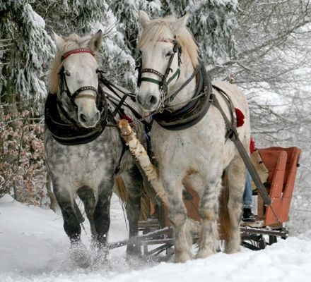 DRVail_SleighRides