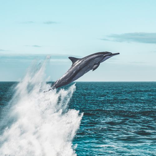 Destination Bucket List Dolphin 3