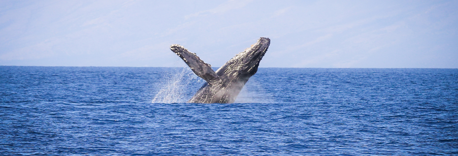 Destination Bucket List_whale