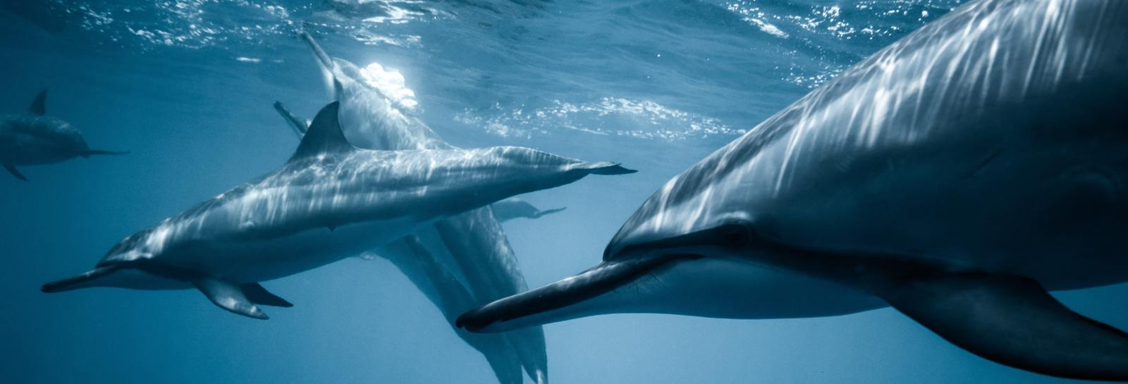 DRH_DestinationBucketList_dolphins4