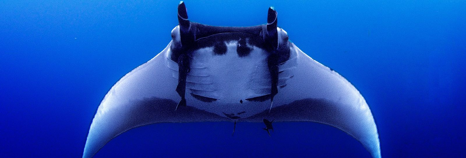 DRH_DestinationBucketList_Manta