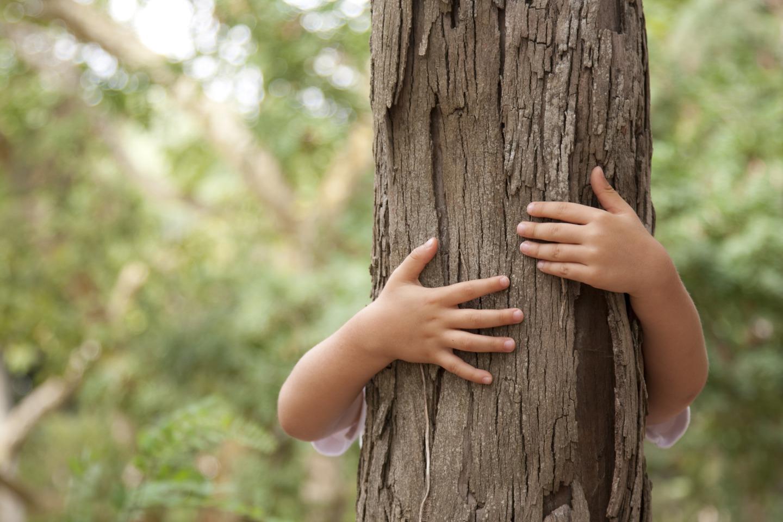 Tree Hugger in San Jose
