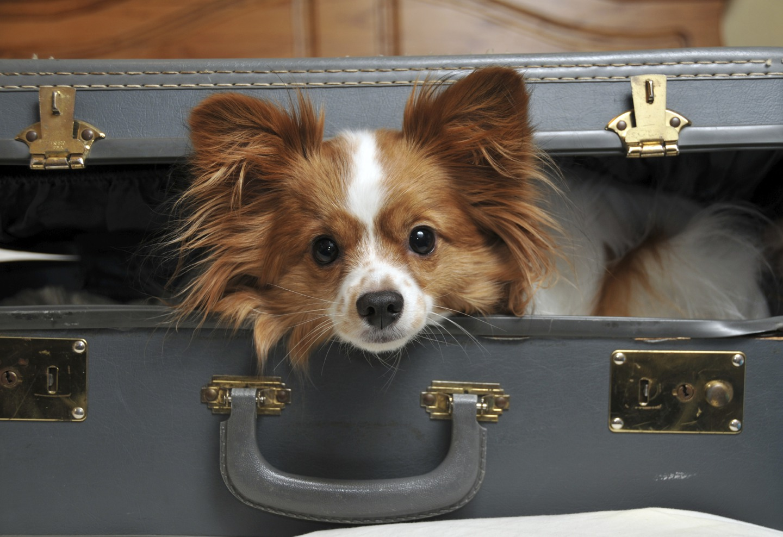 San Jose Dog-Friendly Hotels