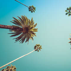 Hotel De Anza_Other_Palm Trees