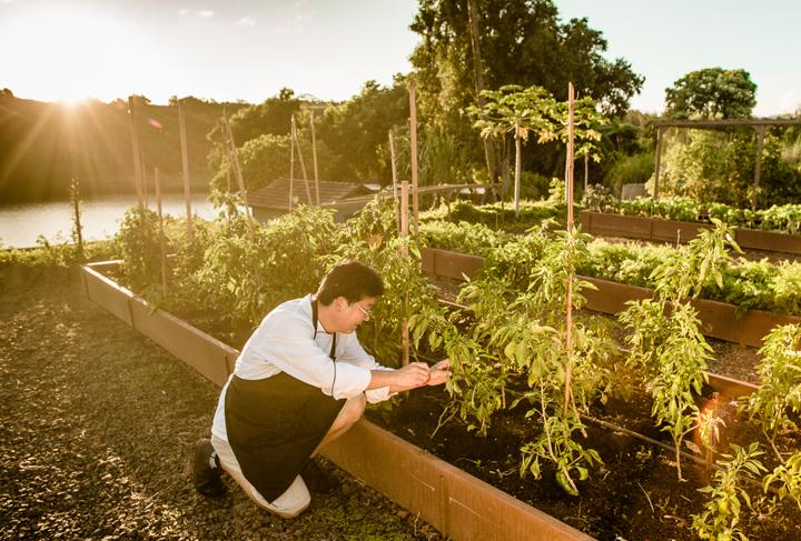 DRH_Kauai_Residences_Kukui'ula_Lifestyle_farmcrops