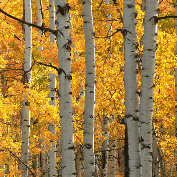 Fall Adventures in Vail
