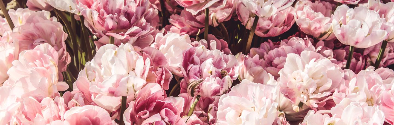 Motif_Rooms_ThisOnesForTheGirls_Flowers_Unsplash