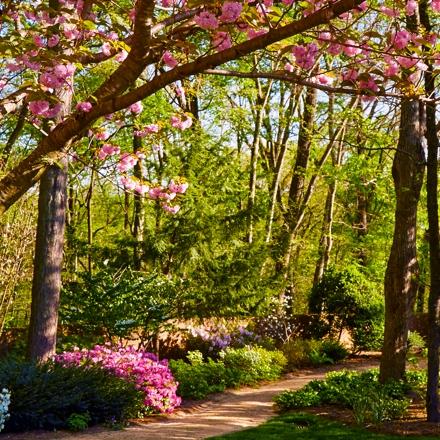 Springtime Views from Rizzo