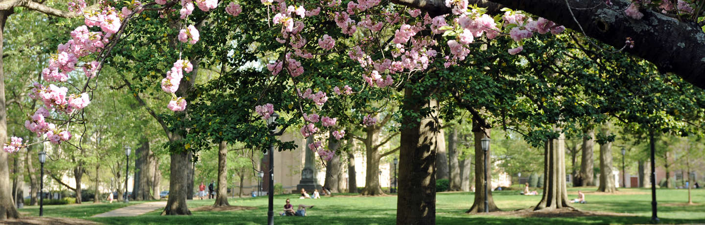 UNC Rizzo Campus Spring Time