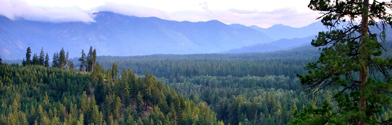 View Of Nature at Suncadia Mountain Resort in Washington