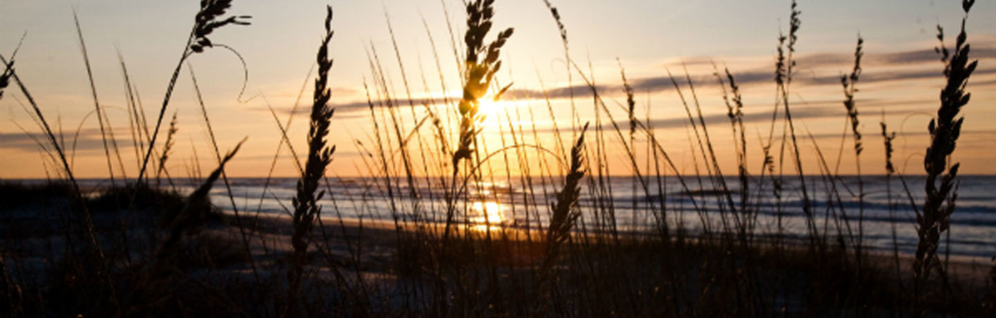 WDR_Resized_CVB_Sunrise Sea Oats