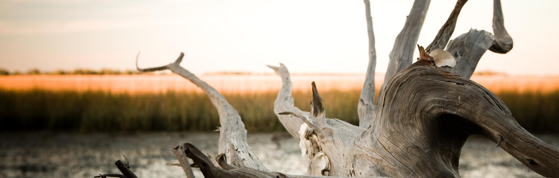 Driftwood in Marsh