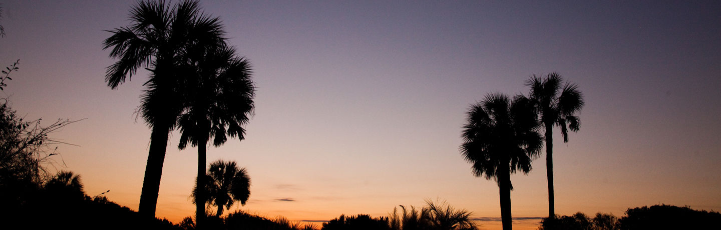 Lowcountry Palm Trees