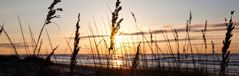 Wild Dunes_Nature_SunriseSeaOats
