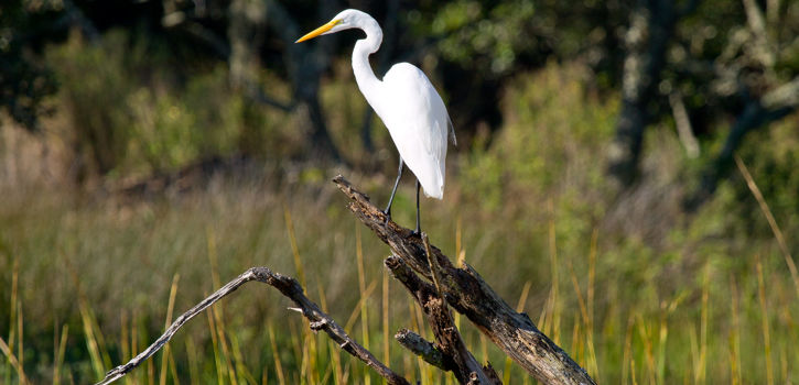 Wild Dunes_Destination Discovery_Explore_Links_Egret