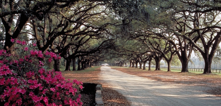 Boone_Hall_Avenue_of_Oaks