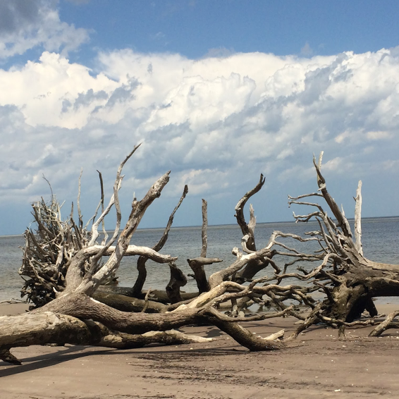 Discovering the Hidden Gem of the Lowcountry: Bulls Island