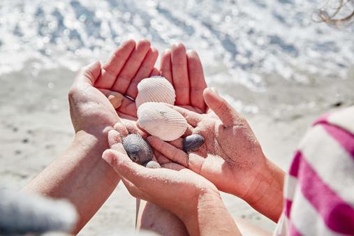 shellls