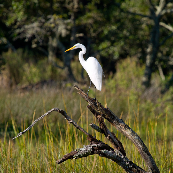 Wildlife in our Waterways