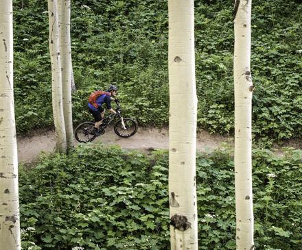 <b>Downhill mountain biking through the trees in Vail, CO.</b>