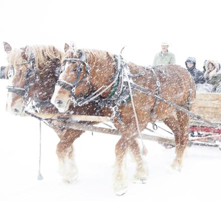 Horse drawn sleigh rides at Ashcroft, Snowmass Village, Colorado