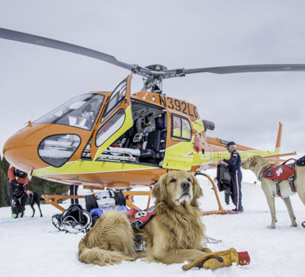 <b>Avalanche safety dogs prepare for Ski Patrol helicopter rescue in Vail, CO.</b>
